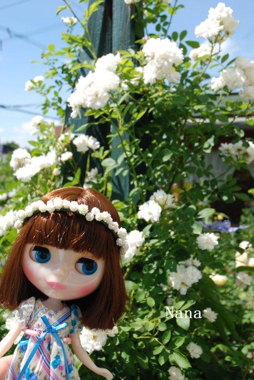 rosegarden1-3.jpg