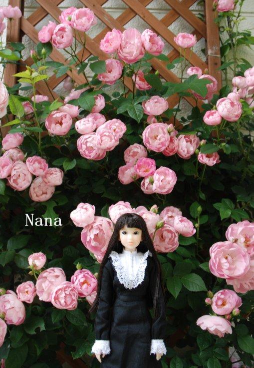 rosegarden1-30.jpg