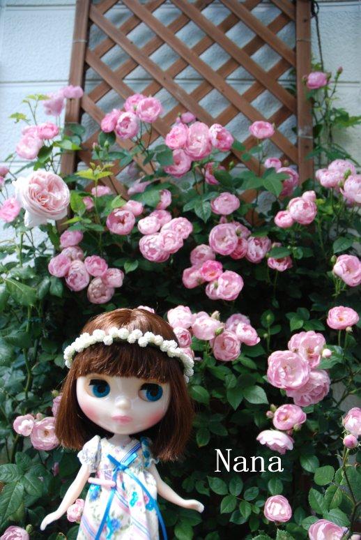 rosegarden1-6.jpg
