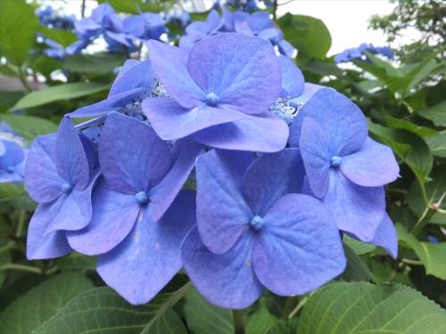 ブルーがきれい
