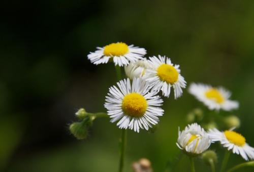 中央の撮影した花