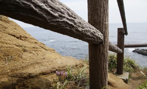 海風にも耐える小さな花