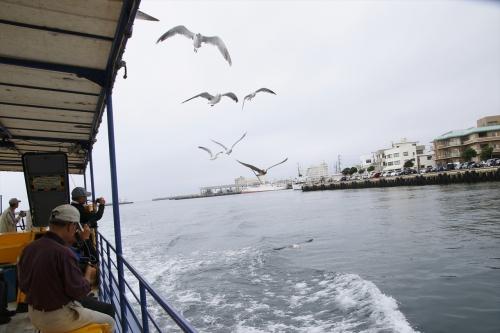 船の周りに寄ってくるカモメ