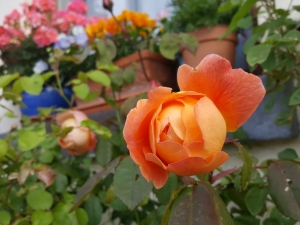 rialtocottagesflowers06174