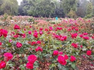 rosegardenbotanicalbelfast6