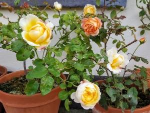 roses0917