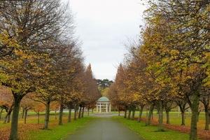 autumntreedublin1117