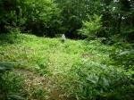 草刈り11