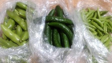 2965野菜3