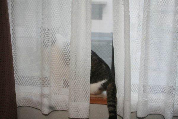 猫さんいたかな