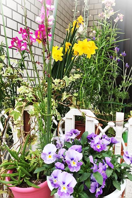 庭の花2017