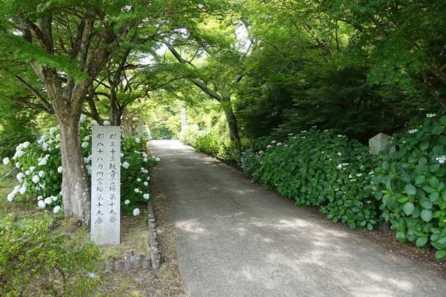4 圓通寺 紫陽花 (2)