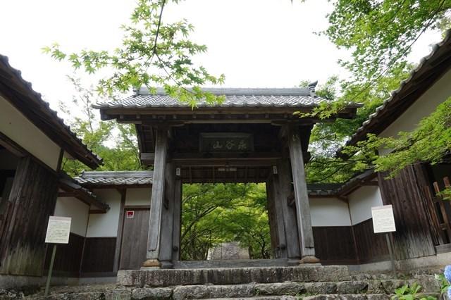 4 圓通寺 紫陽花 (12)