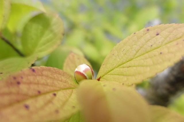1 沙羅双樹 (1)