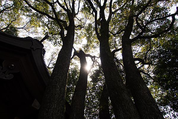 氷上姉子神社鎮守の森