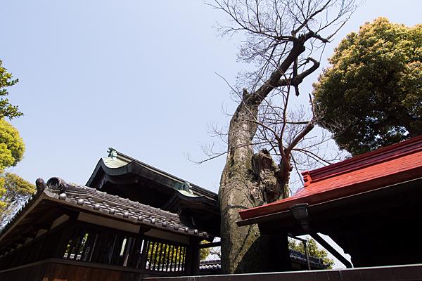 牛毛神社御神木と本殿