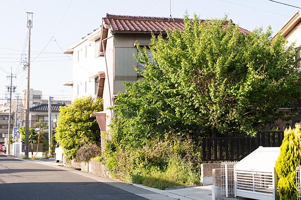 空き家の梅の木新緑