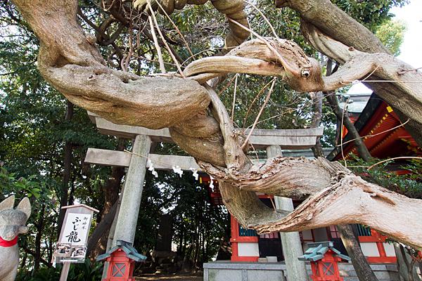 豊藤稲荷神社ふじ龍