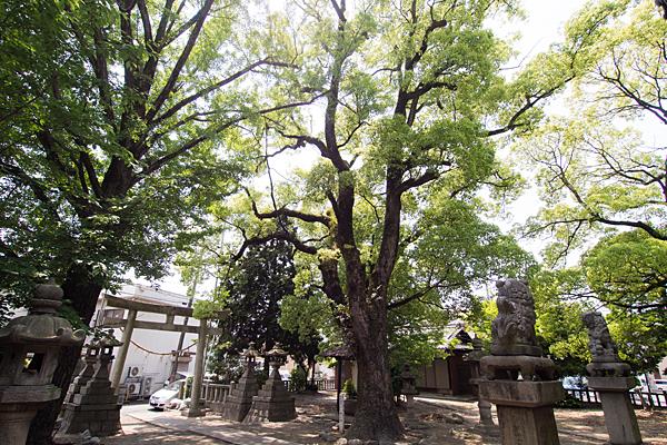 川前白山社木々と境内の風景