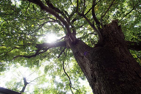 秋葉社木々と太陽