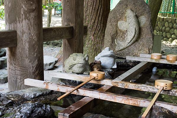 椿大神社手水舎のカエル