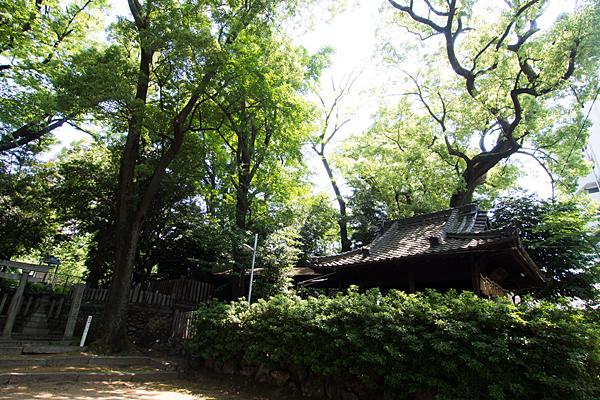 大須白山神社神木と社殿
