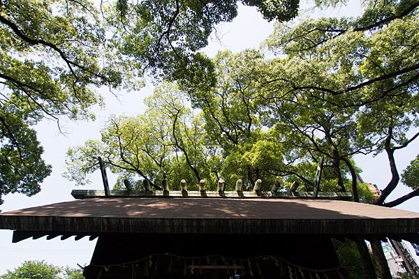 露橋神明社拝殿屋根と木々