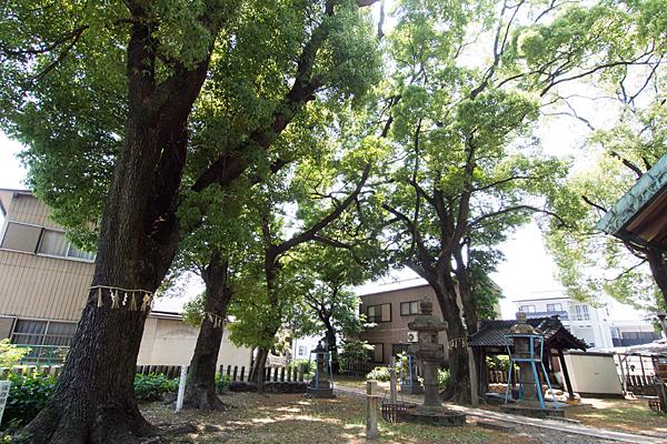 露橋神明社境内の風景