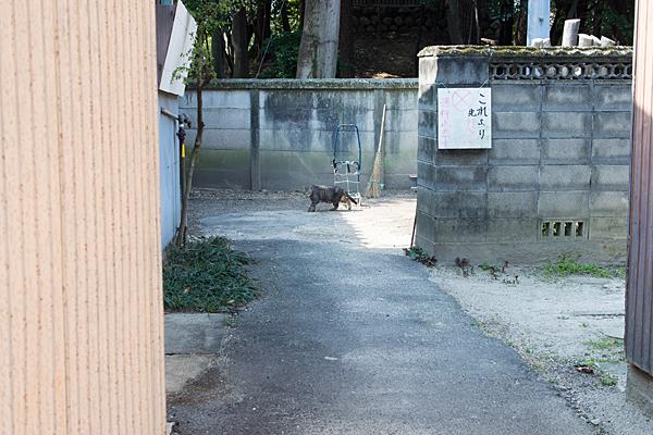 路地裏を歩く猫