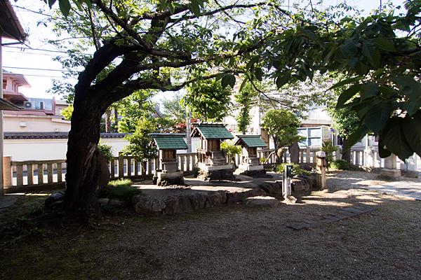 須賀町社宮司社桜の木