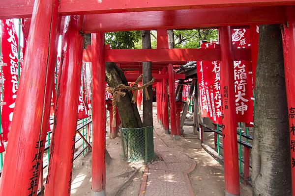 冨士八幡社稲荷鳥居と木