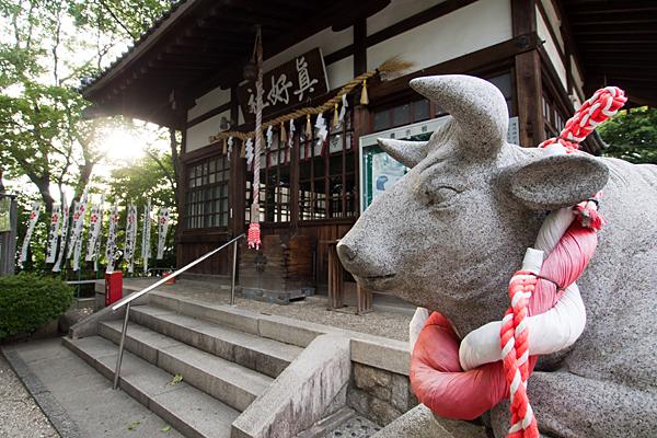 眞好天神社牛像と拝殿