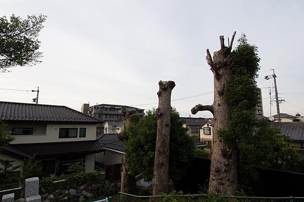 村上神社切られた木