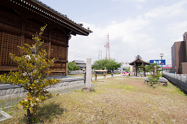 長須賀八幡社木の苗木