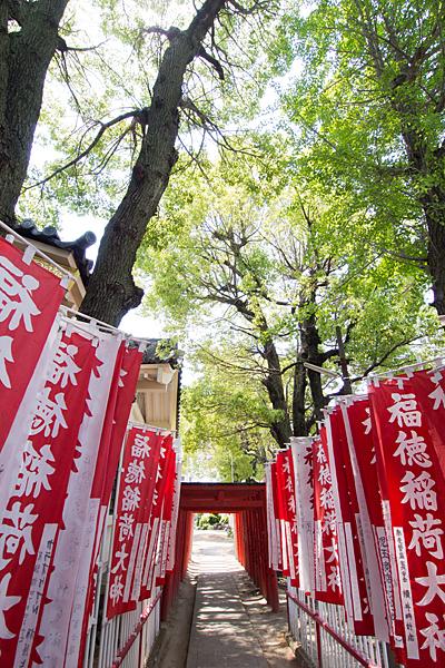 西古渡神社のぼりと木々