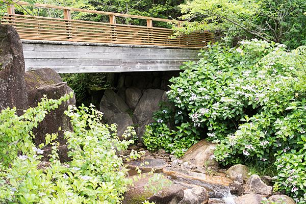 モリコロ日本庭園のガクアジサイ