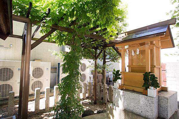 大道米運龍神本社前藤の木