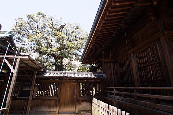 大須富士浅間神社拝殿奥の木