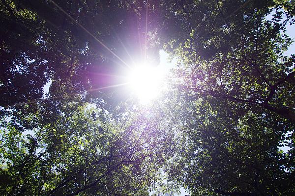 榊森白山社杜と太陽
