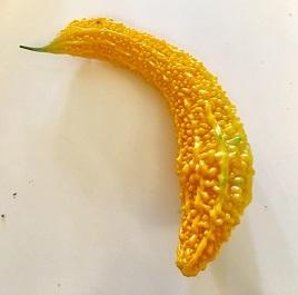 オレンジゴーヤ