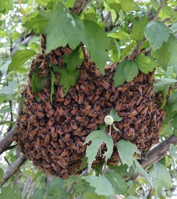 170917蜜蜂
