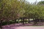 IMGP6335.jpg