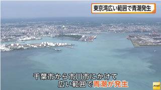 東京湾で青潮が発生。魚介類に影...