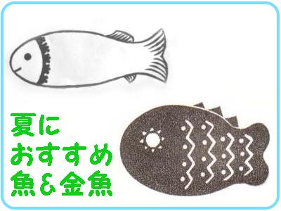夏におすすめ魚金魚