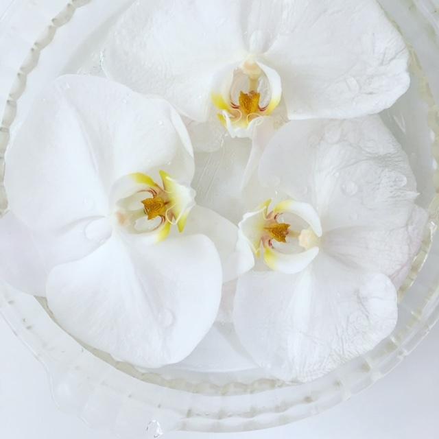 胡蝶蘭最後のお花