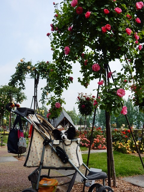 ルビーと薔薇のツリー