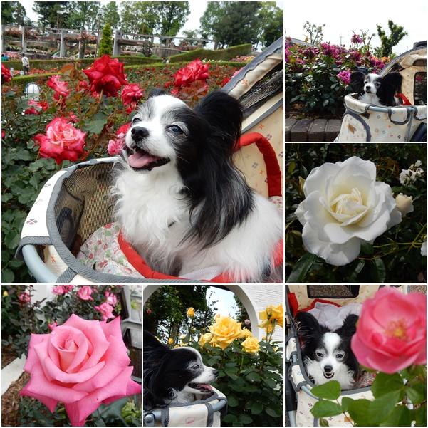 薔薇とルビー