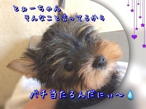 201708111339318ce.jpg