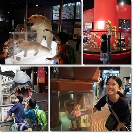 Museum 2017-4