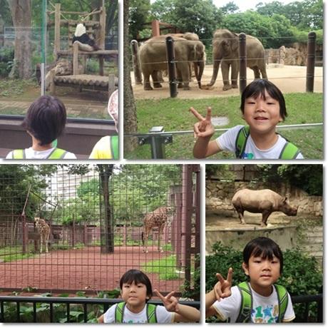 Ueno Zoo 2017-1